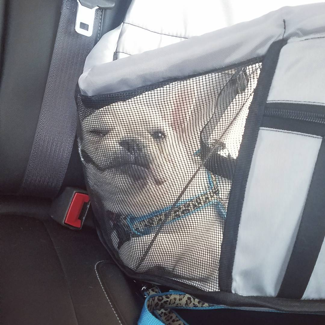 waterproofpetcarrierforcartravel