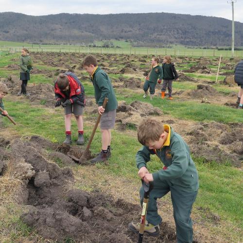 Tasmania tree planting