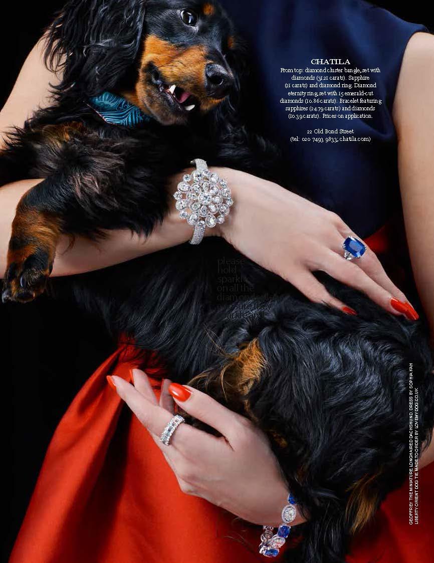 dog, dogs, style, magazine, press, editorial, tatler