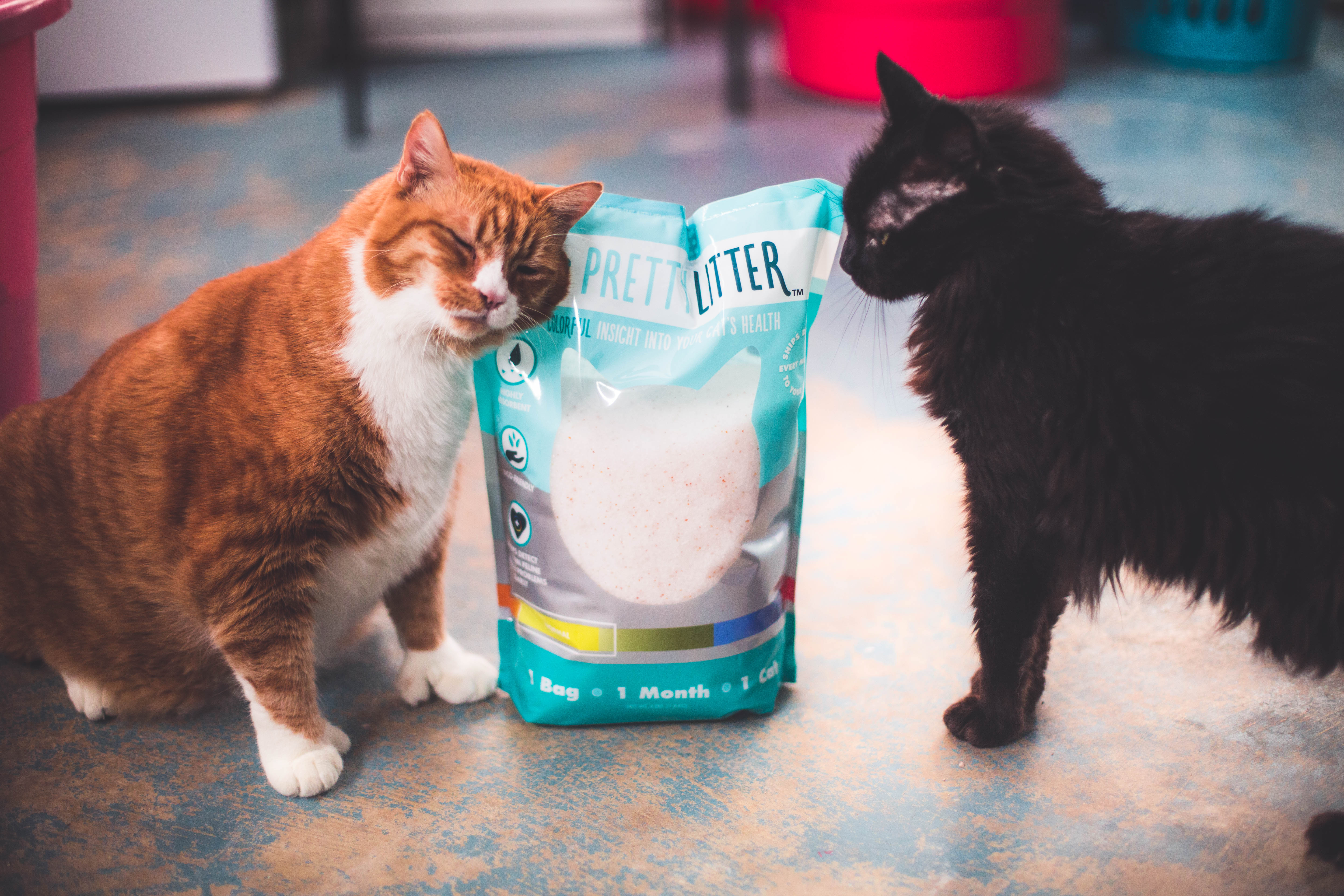 Why Cat Parent's Are Obsessed With This Litter - PrettyLitter