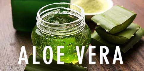 aloe vera for pain