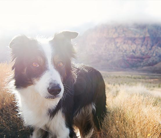 Zumi Dog
