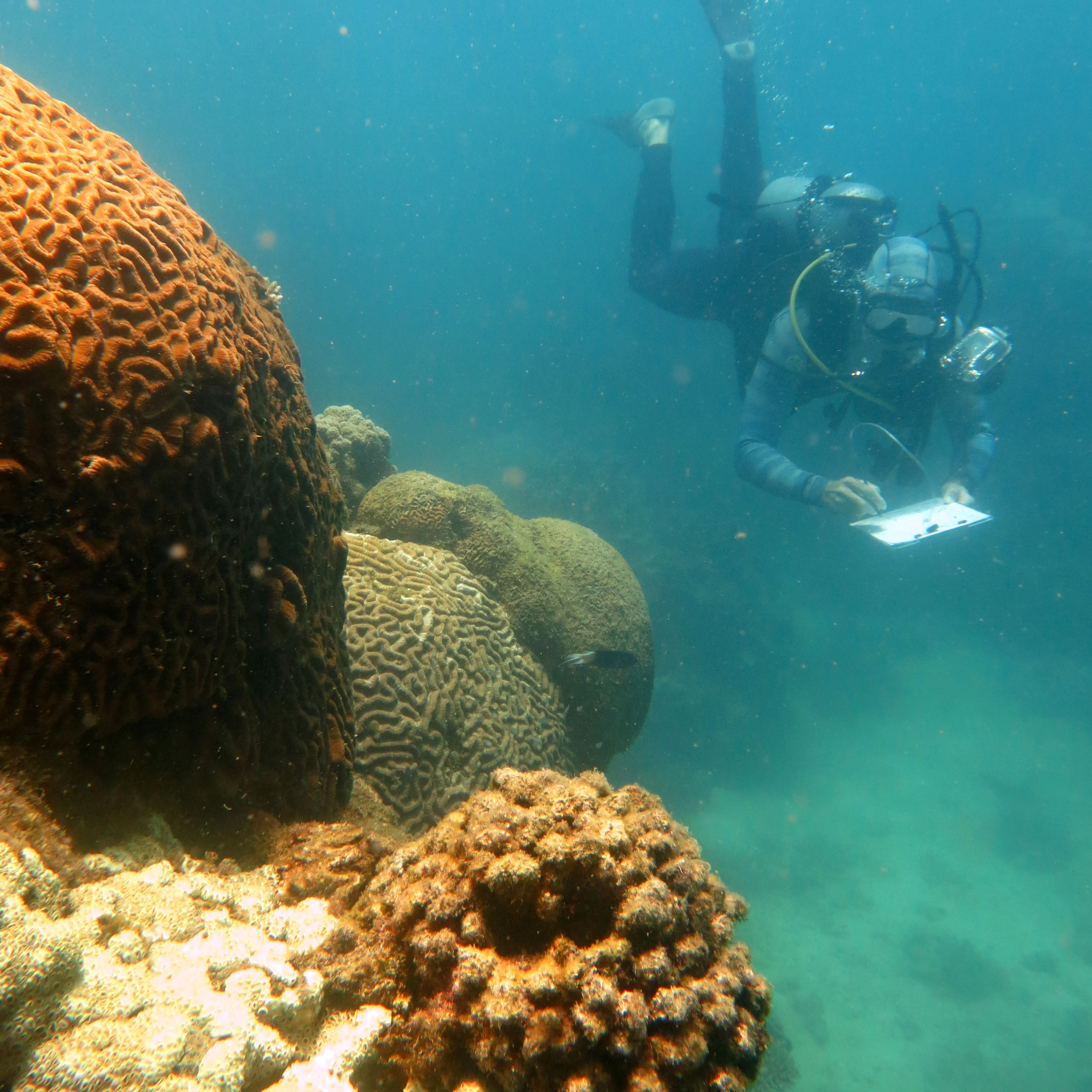 Base line Survey of existing Reef