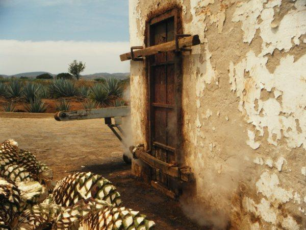 Traditional horno oven used to cooked agaves for tequila making