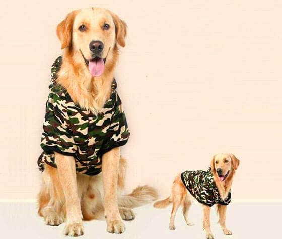 dog hoodies with free shipping