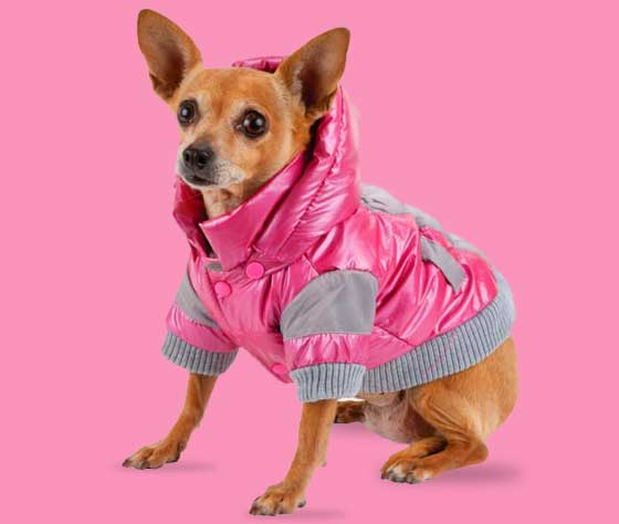dog in sport winter aspen jacket