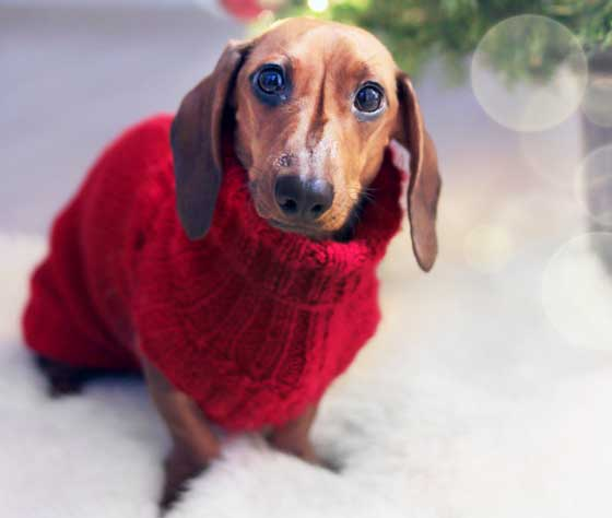dog sweaters with free shipping