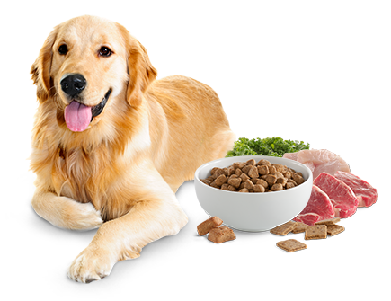 dog nex to food ingredients