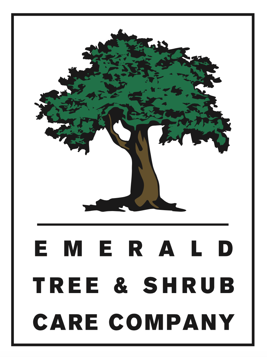 Emerald Tree Care logo