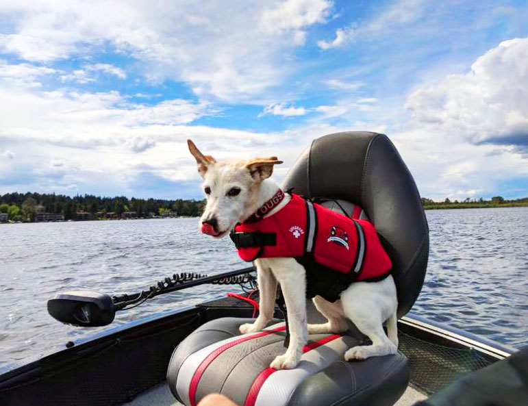 dog sitting on captains chair in boat