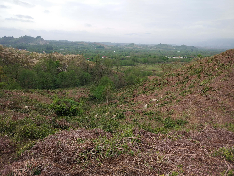 Abandoned tea plantation