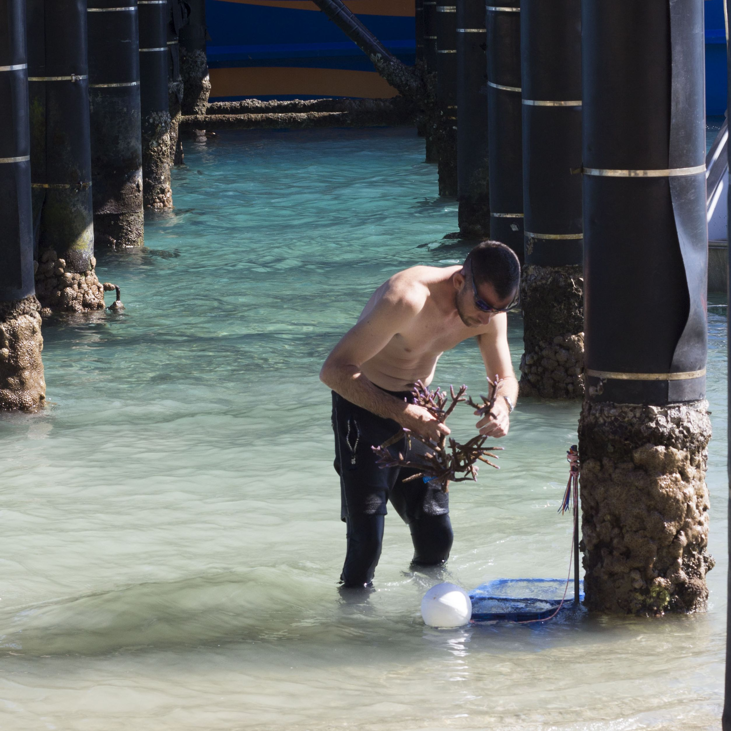 Keeping Coral in the water while working