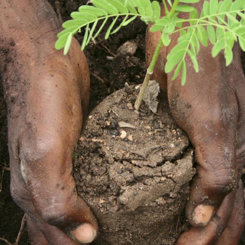 Haiti Soil