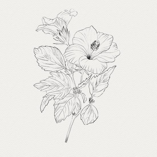 Hibiscus - Traitement peau nature
