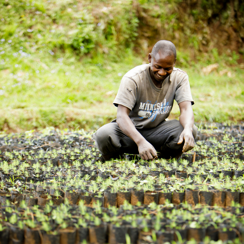 Plant Trees in Tanzania - Kilimanjaro Project by Andrew Mavinkovich