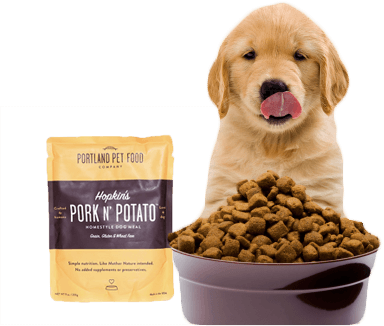 dog licking chops over dog food
