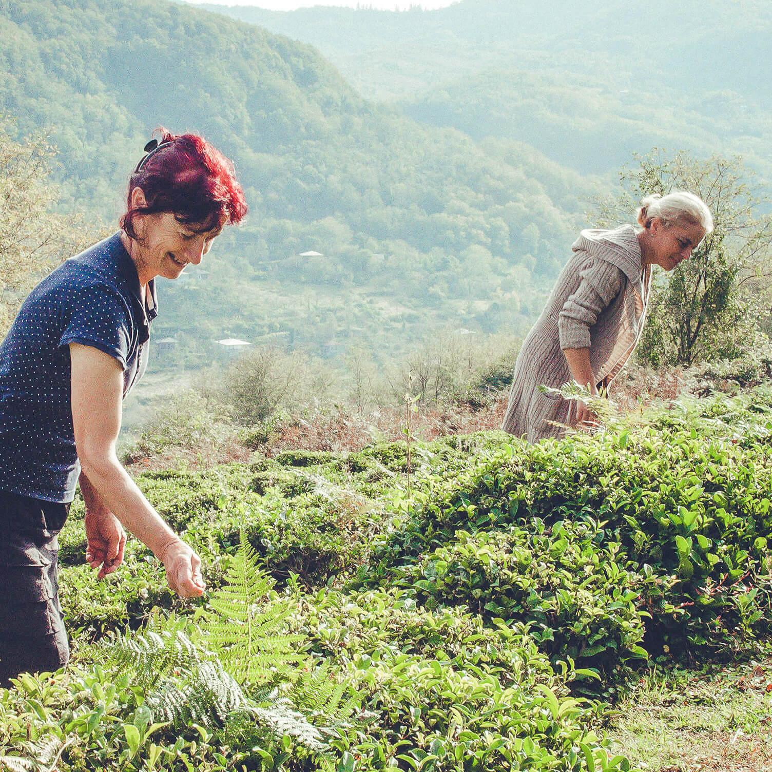 Maia and Ketino and Opurchkheti tea plantation