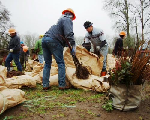 Oregon Tree Planting