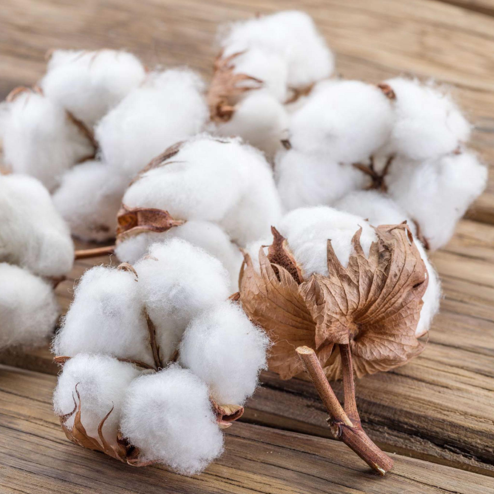 Organic PIMA Cotton