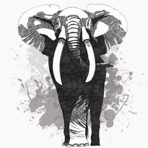 botas cuadra elefante