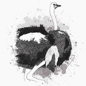 pieles de avestruz