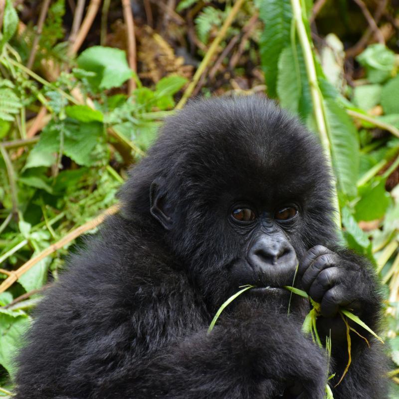 Rwanda Forests