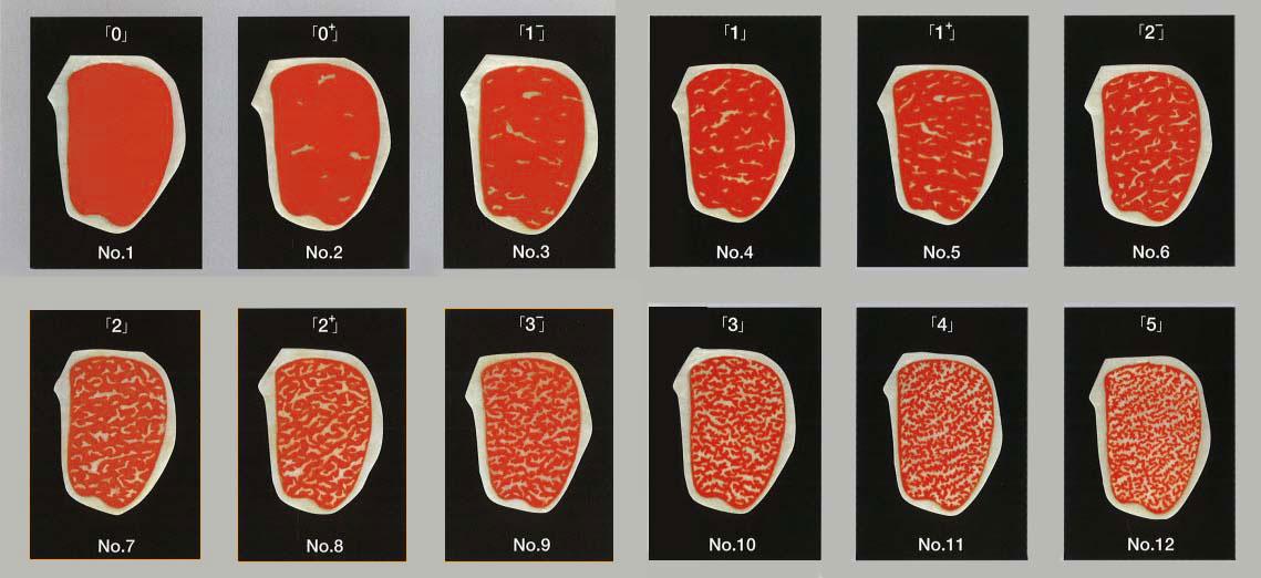 Beef Marbling Standard Scale