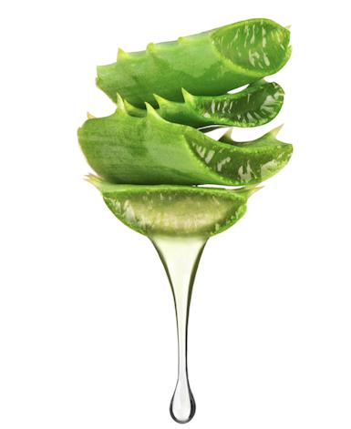 Aloe vera natural deodorant ingredient
