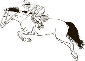 HR Fisken Sport Horse Feed