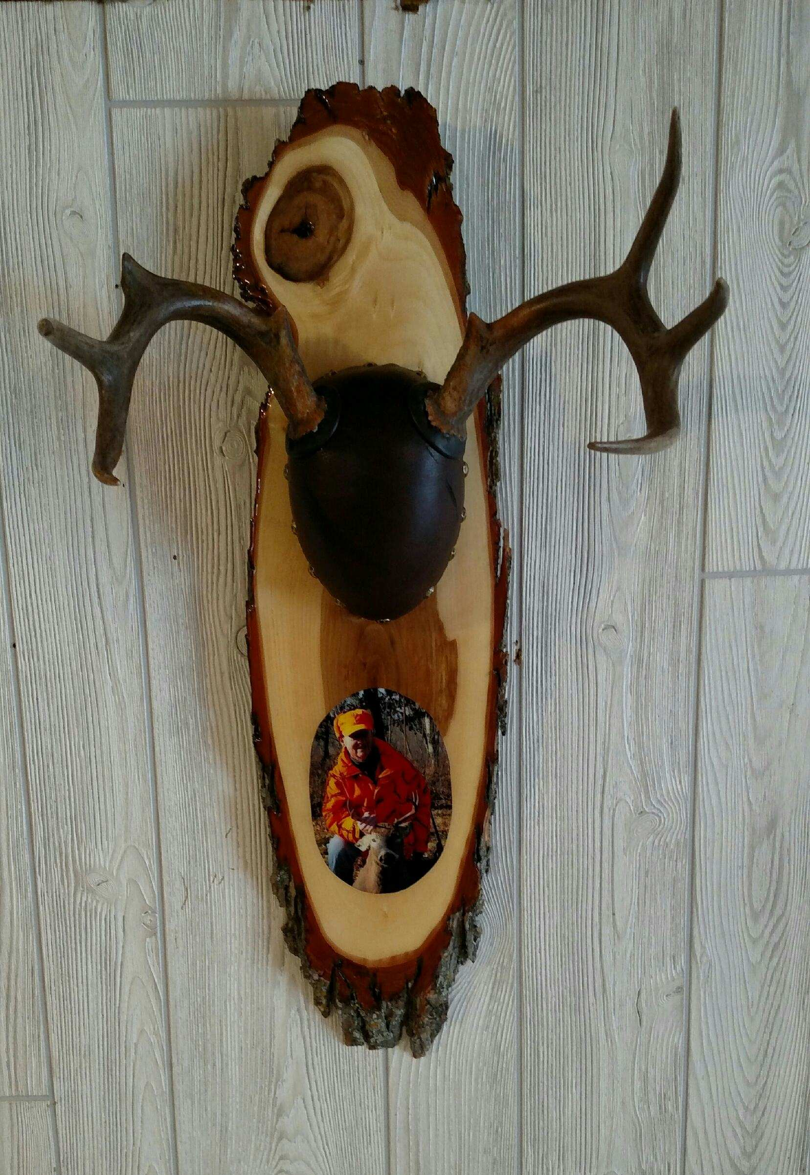 Wood Taxidermy Plaque