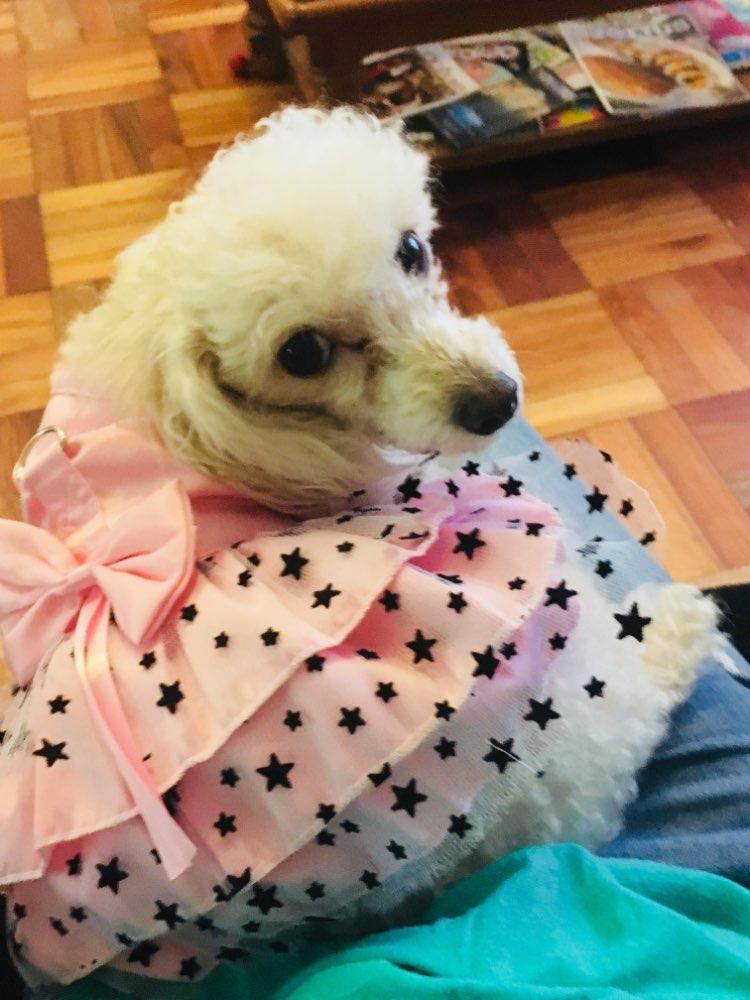 pinkstarrydogdress