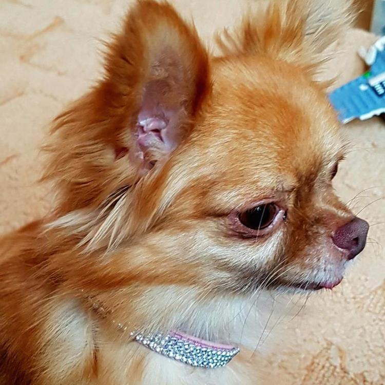 pinkblingdiamanterhinestonedogcollar
