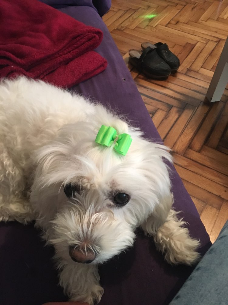 handmadedogbowgroomingbowset