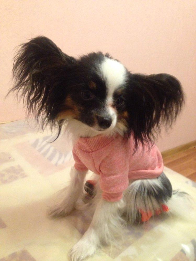 pinkclassicdogsweater