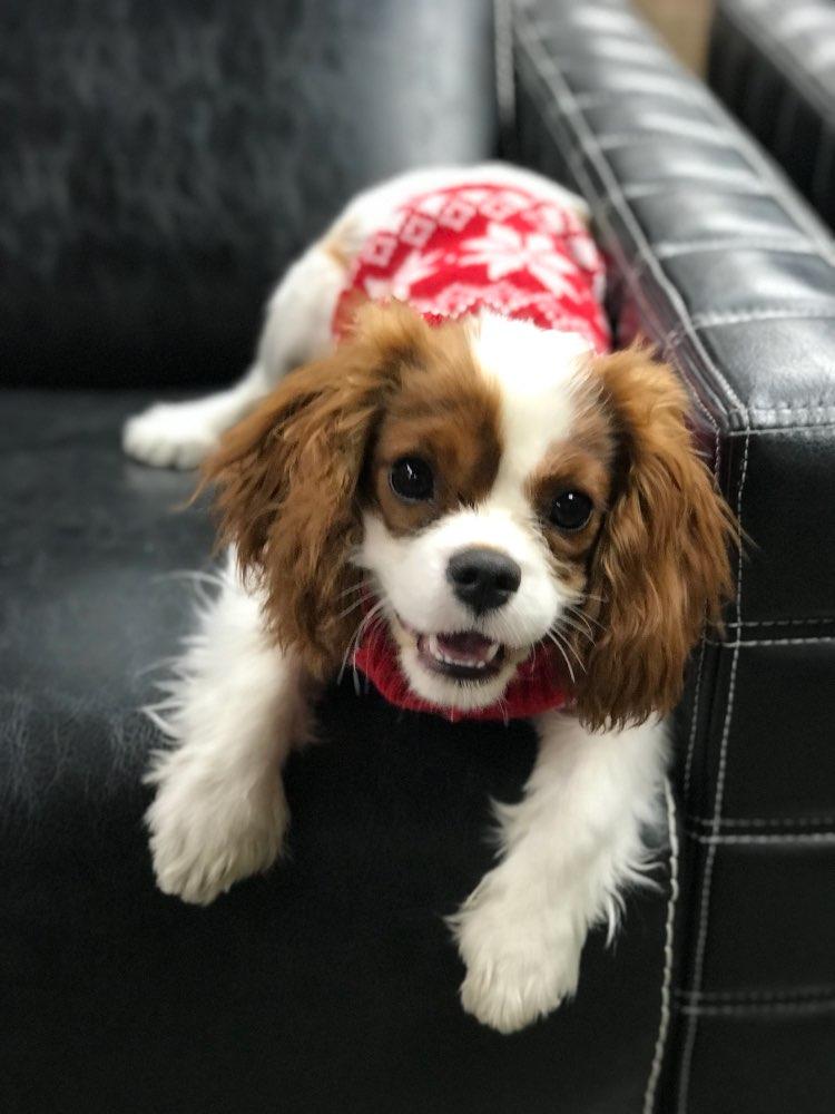 vintagewintersnowflakedogsweater
