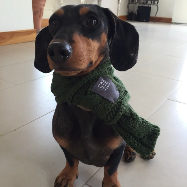 greenchunkyknitdogscarf