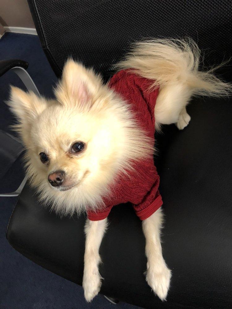 redclassicturtleneckdogsweater