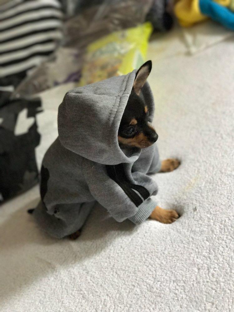 dogbabyhoodie