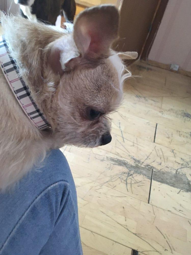 plaidrhinestonebonedogcollar