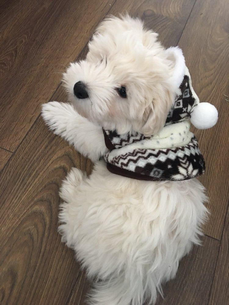 cozysnowflakehoodiedogsweater