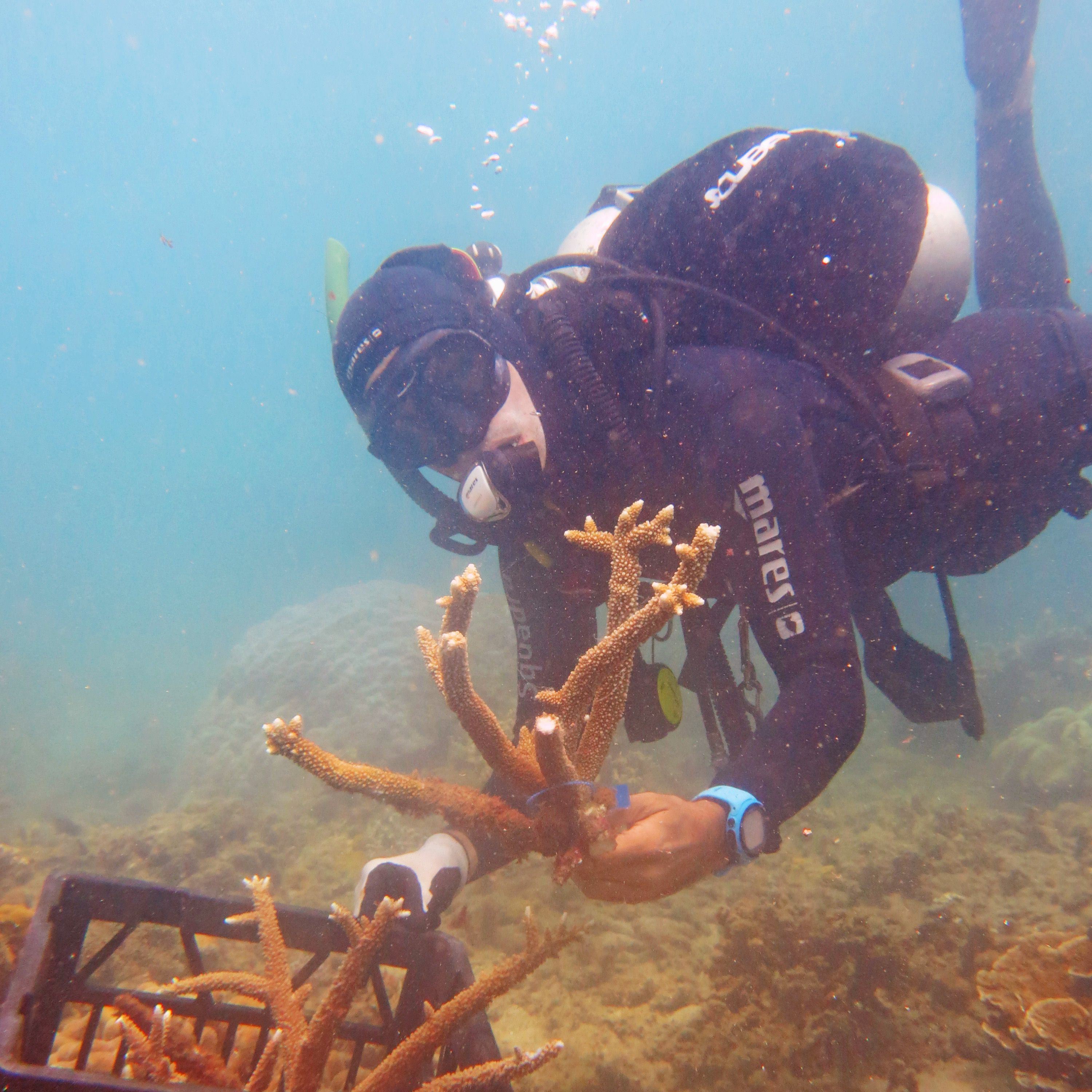 Collecting coral Pieces for Transplant