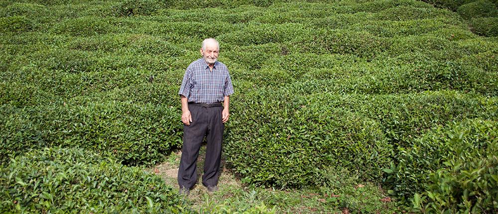 Shaqro in his tea plantation, in Zarati, Georgia.